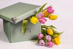 Boîte vert clair avec les tulipes de ressort sur le fond blanc Photos stock