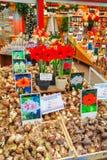 Boîtes avec des ampoules au marché de flottement de fleur à Amsterdam Photos stock