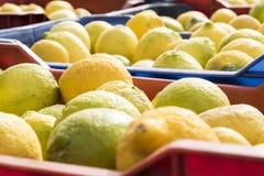 Boîtes complètement de citrons fraîchement sélectionnés de Sicile Photo libre de droits