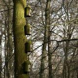 Boîtes d'élevage dans la forêt Photographie stock