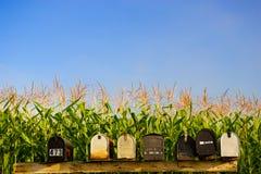 Boîtes de courrier et un fond de champ de maïs. Image libre de droits
