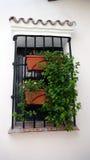 Boîtes de fenêtre Photo libre de droits