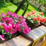Boîtes de fleur de balcon remplies de fleurs Photographie stock libre de droits