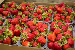 Boîtes de fraises sur le marché d'agriculteur Caisses complètement de Fragaria Photo stock