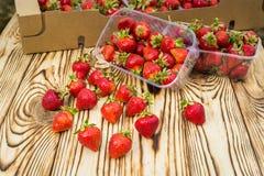 Boîtes de fraises sur le marché d'agriculteur Caisses complètement de Fragaria Images libres de droits