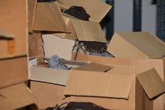 Boîtes en carton image libre de droits