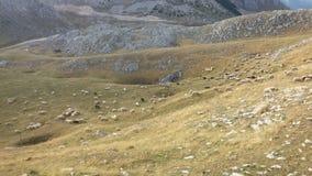 Bośnia i Uprawiać ziemię Herzegovina, pasma/ fotografia stock