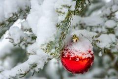 Boże Narodzenia bawją się pod śniegu ona gałąź jodła na dobrze, Bożenarodzeniowa czerwona piłka Istna zima w ogródzie obraz royalty free
