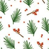 Boże Narodzenia deseniują z świerkowymi gałąź i jagodami Obraz Stock