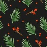 Boże Narodzenia deseniują z świerkowymi gałąź i jagodami Fotografia Stock