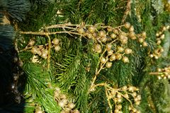 Boże Narodzenia lub nowy rok tła fotografia stock