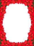 Boże Narodzenia obramiają od czerwonych poinsecj Zdjęcie Royalty Free