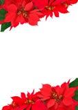 Boże Narodzenia obramiają od poinsecj Fotografia Royalty Free
