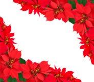 Boże Narodzenia obramiają od poinsecj Obraz Royalty Free