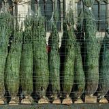 boże narodzenia pakujący rzędu drzewa Fotografia Stock