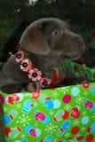boże narodzenia przedstawiają szczeniaka Fotografia Royalty Free