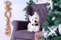 Boże Narodzenia Są prześladowanym jako symbol nowy rok zdjęcie royalty free