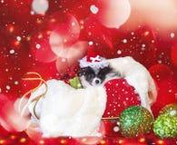 Boże Narodzenia Są prześladowanym, szczeniak w Santa kapeluszu z bokeh tłem zdjęcie royalty free