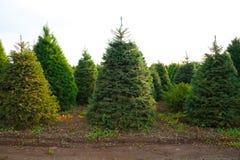 boże narodzenia uprawiają ziemię drzewa fotografia royalty free