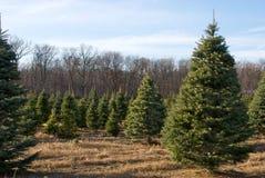 boże narodzenia uprawiają ziemię drzewa Obrazy Royalty Free