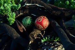 Boże Narodzenia w gałęzatki, czerwieni i zieleni Bożenarodzeniowych sferach z błyskotliwość dekoracjami, sucha gałęzatka, czarni  Obraz Stock