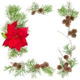 Boże Narodzenie kwiatu dekoraci sosna rozgałęzia się Kwiecistego mieszkanie nieatutowego Obraz Stock