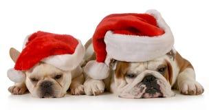 Boże Narodzenie psy Obrazy Royalty Free