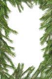 boże narodzenie rabatowa zieleń Fotografia Royalty Free