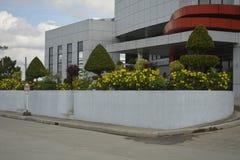 Boże Narodzenie rośliny przy Davao Del Sura Kolosseum obrazy royalty free