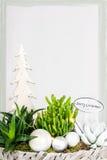 Boże Narodzenie rośliny przygotowania Zdjęcie Royalty Free