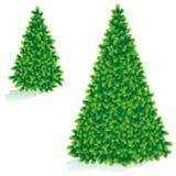 boże narodzenie wielkościami dwóch drzewa Obrazy Royalty Free