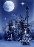 Bożenarodzeniowa śnieżysta świerczyna w lesie przy nocą, snowing i niebem księżyc obrazy royalty free