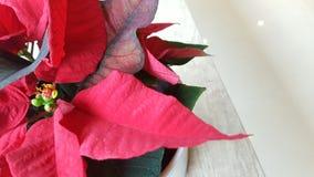 Bożenarodzeniowa czerwień na stole obrazy stock