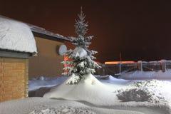 Bożenarodzeniowa jodła w śnieżnej zimie Fotografia Stock