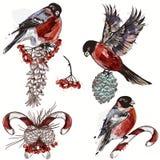 Bożenarodzeniowa kolekcja wektorowi dekoracyjni elementy dla projekta ilustracji