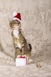Bożenarodzeniowa kota Santa Claus nakrętka Obrazy Royalty Free