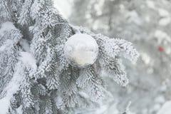 Bożenarodzeniowa piłka na mroźnych jedlinowych gałąź Zimy plamy tło obraz stock