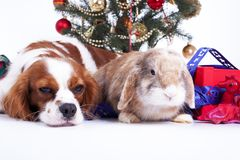 Bożenarodzeniowa zwierzęca boże narodzenie psa zwierzęcia domowego fotografia Świętuje boże narodzenia z ślicznym szczeniaka psem Fotografia Stock