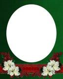 Bożenarodzeniowe kwieciste rabatowe poinsecje zdjęcia royalty free