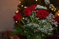 Bożenarodzeniowe róże Obrazy Royalty Free