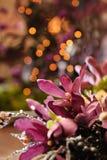Bożenarodzeniowi kwiaty Fotografia Royalty Free