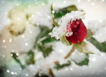 Bożenarodzeniowi powitania, świąteczny tło dla wizerunków Obrazy Stock