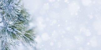 Bożenarodzeniowy dekoracja sztandar Śnieżna sosny gałąź pod śniegiem fotografia stock