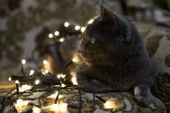 Bożenarodzeniowy kot, makro- zbliżenie sztuki pięknej kamery oczu mody pełne splendoru zieleni klucza wargi target1847_0_ depresj Zdjęcia Stock