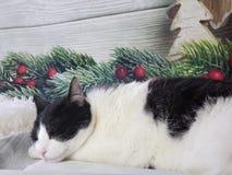 Bożenarodzeniowy kota dosypianie zdjęcia stock