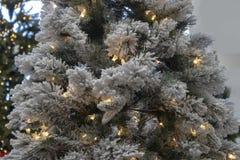 Bożenarodzeniowy tło gromadzący się drzewo z światłami białymi z ciemnozielonym bokeh drzewem w tle fotografia royalty free