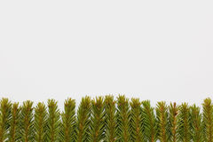 Bożenarodzeniowy tło jodła rozgałęzia się przy dnem na białym tle Fotografia Stock