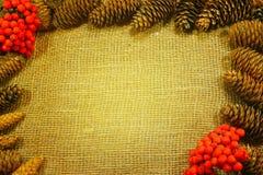 Bożenarodzeniowy tło z sosną konusuje na starej szorstkiej tkaninie Obraz Royalty Free