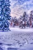 Bożenarodzeniowy zima krajobraz, świerczyna i sosny zakrywający w śniegu, fotografia royalty free