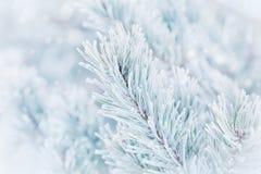 Bożenarodzeniowy zimy tło od sosny zakrywającej z hoarfrost, mróz lub oszrania w opadzie śniegu Uroczy krajobraz natura Zdjęcia Royalty Free